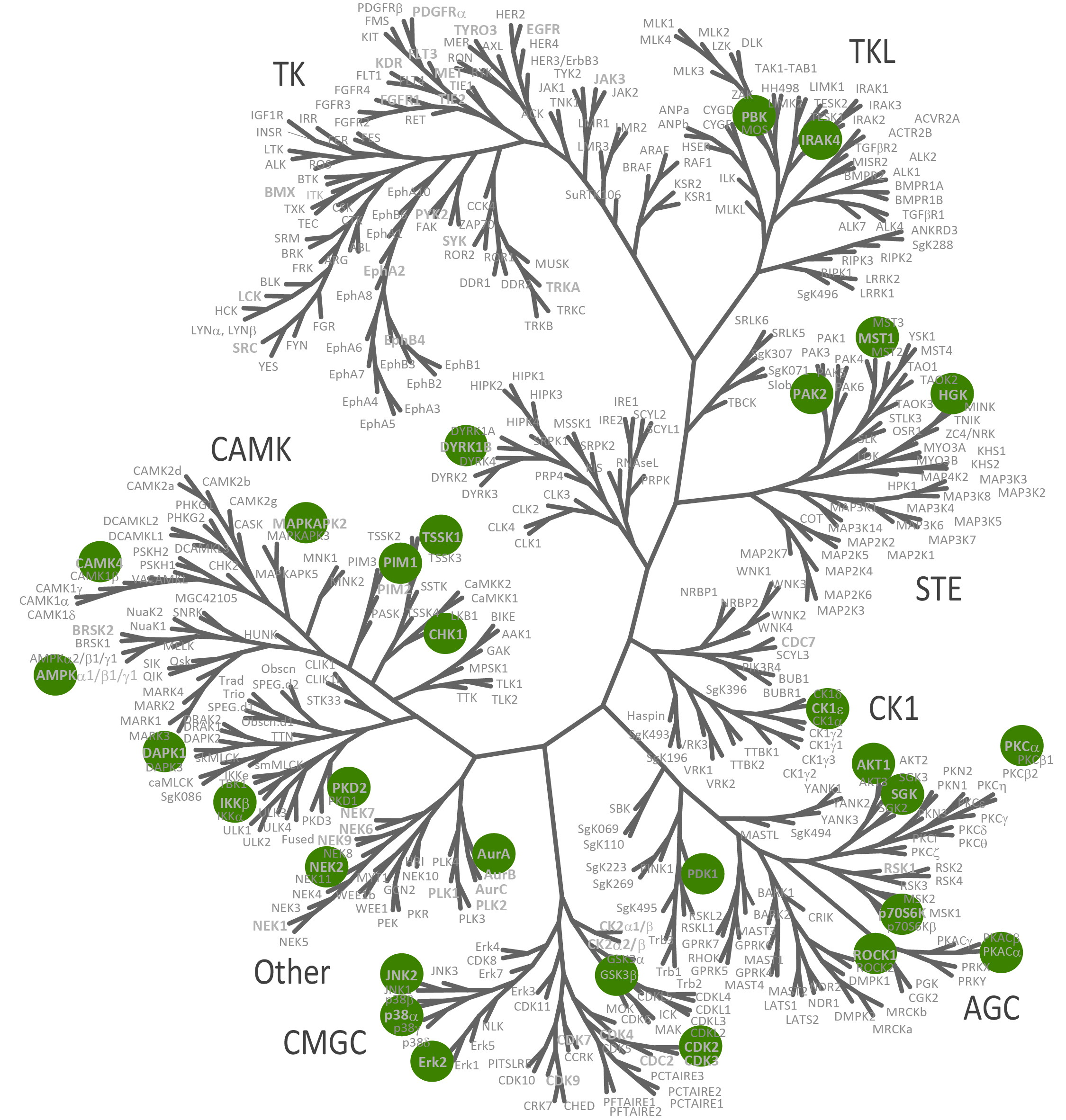 https://www.ntrc.nl/wp-content/uploads/2014/02/Kinome-Tree-Quickscout_STK_2.jpg